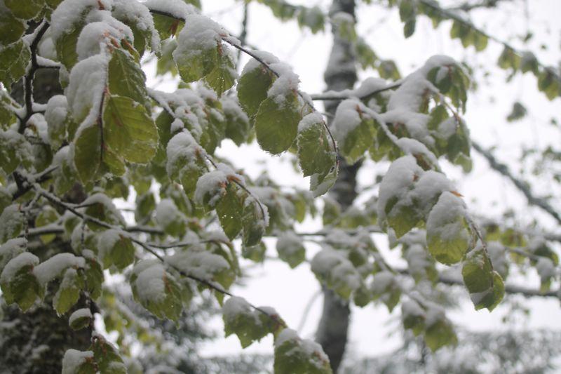 neige en mai en Alsace